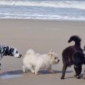 cachorros cheirando varias raças