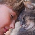 gato tutor amor
