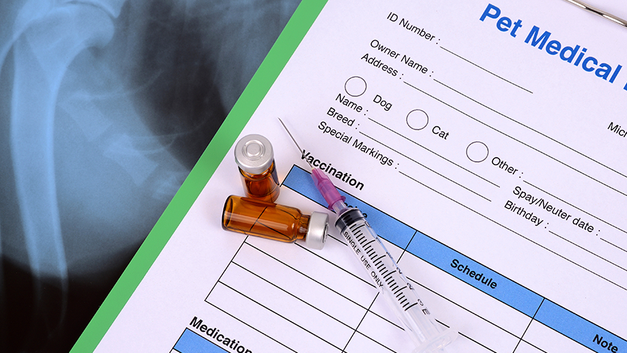 vacinação vacina