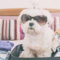 cachorro na mala