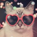 diadosnamorados_gato