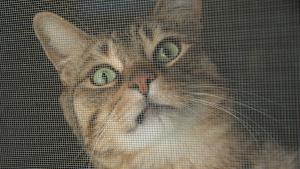 janela telada