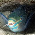 peixe dormindo