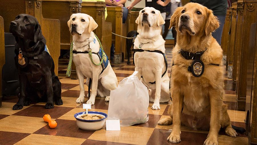 Conheça os cães que dão suporte emocional no sistema judiciário
