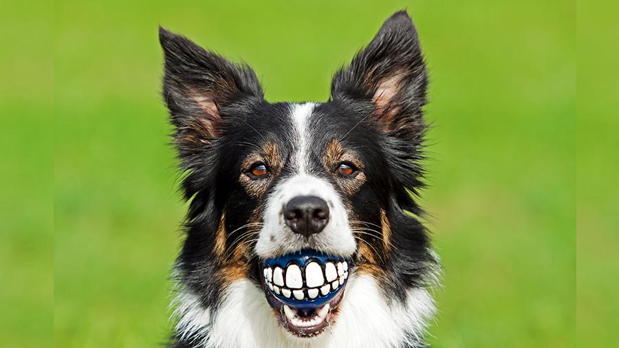cachorro sorriso
