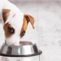 dog-comendo