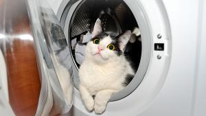gato na maquina de lavar roupa