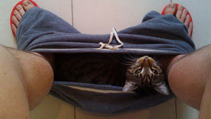 gato e você no banheiro