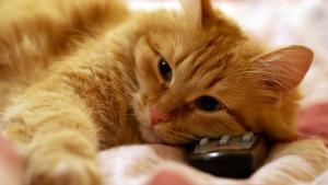 gato e controle remoto
