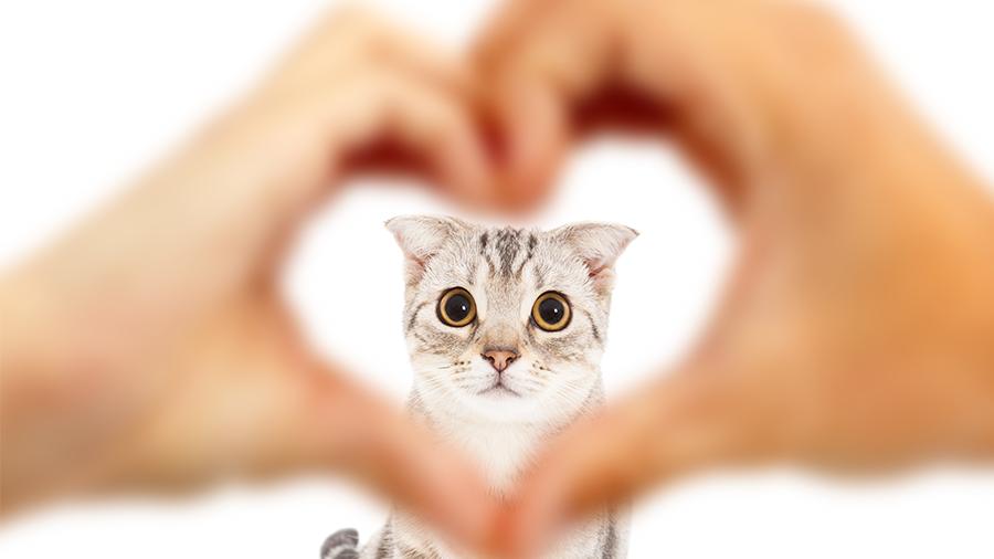 Coisas estranhas que só donos de gatos fazem
