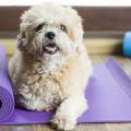 cachorro yoga