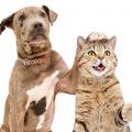 catdog-canhoto