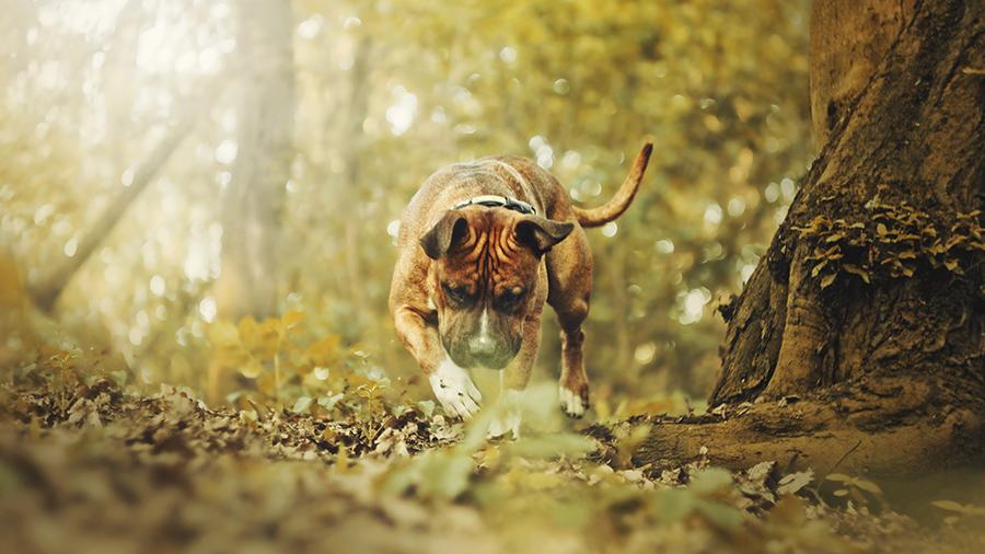 Você conhece os cachorros do Grupo Terrier?