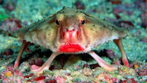 fish-bat red lips