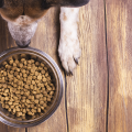 cachorro e raçao