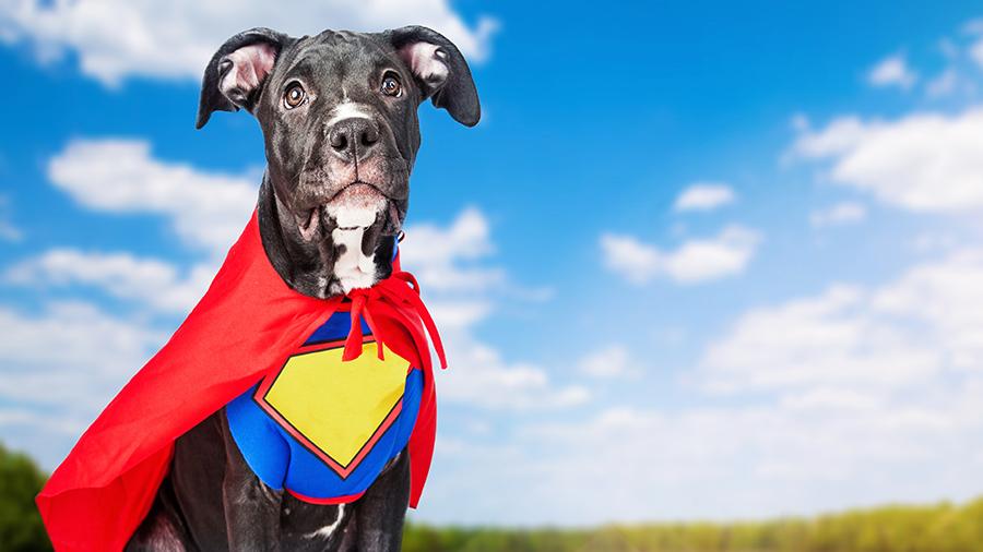 cachorro herói