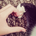 patinha gato