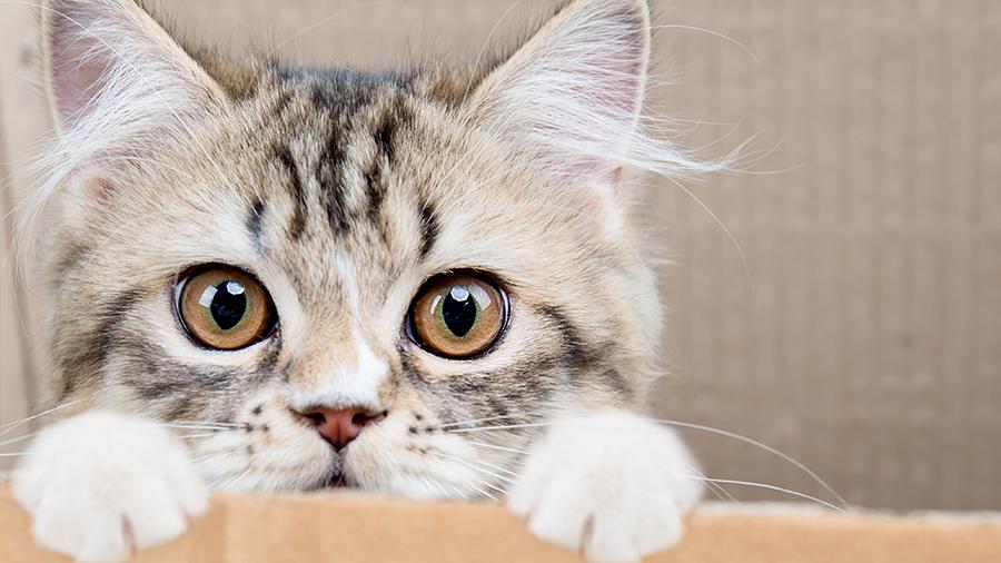 gato-filhote