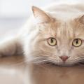 gato-olhando