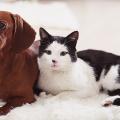 salsicha-e-gato-preto-e-branco