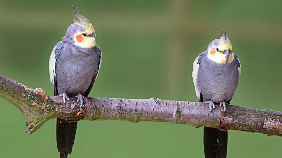 aves-amigas_dominio-publico