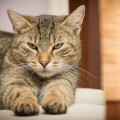 gato-comportamento-dicas_DOMINIO-PUBLICO