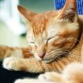 gato-notivago_DOMINIO-PUBLICO