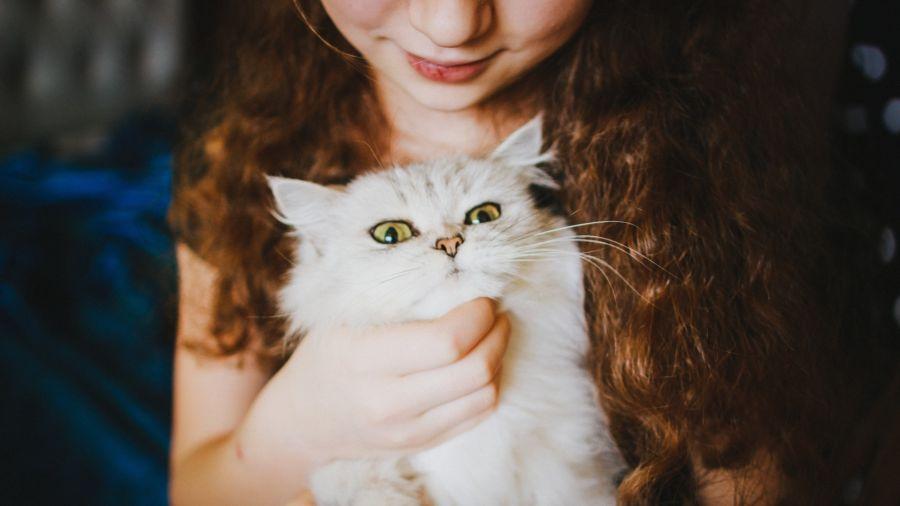 gatos-filhos_dominio-publico