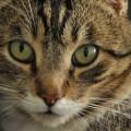 gato-olhos_DOMINIO-PUBLICO