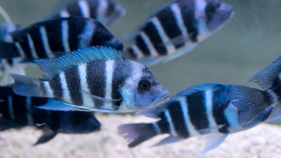 peixe-aquario_FREE-PIK