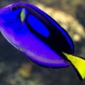 peixe-mar_DOMINIO_PUBLICO