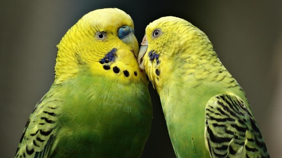 aves-afeto_DOMINIO-PUBLICO