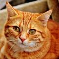 gato-glaucoma_DOMINIO-PUBLICO