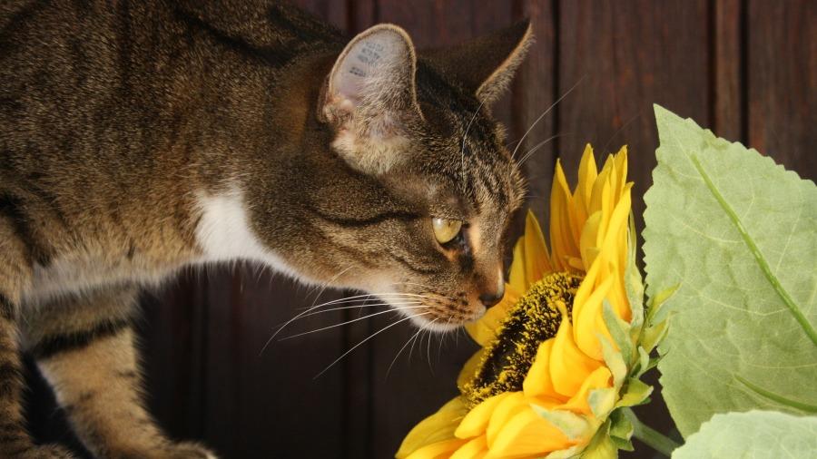 gato-plantas_DOMINIO-PUBLICO