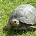 especieis-tartarugas_DOMINIO-PUBLICO