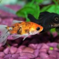 peixe-comida_DOMINIO-PUBLICO