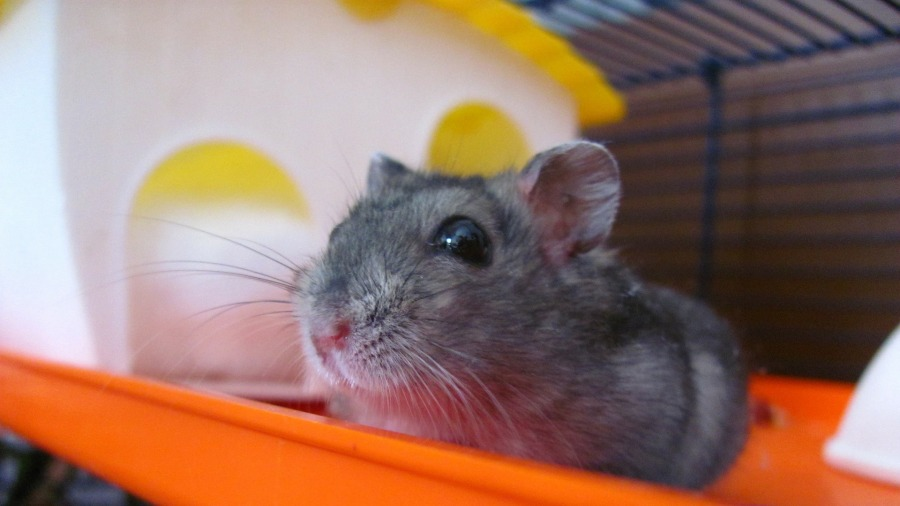 roedores-calor_DOMINIO-PUBLICO3