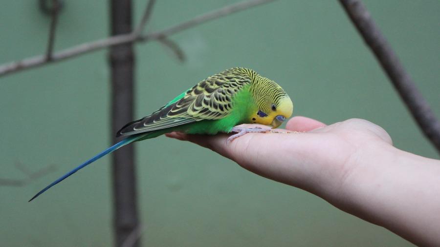 aves-cuidados_DOMINIO-PUBLICO