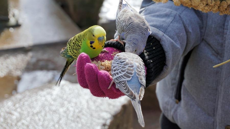 Sem uma dieta correta, as aves também podem ficar obesas