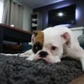 cachorro-xixi