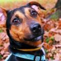 cachorro-bumbum no chao_DOMINIO-PUBLICO