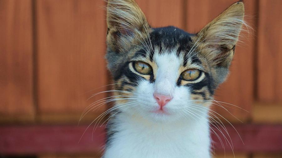 gato-depressao_DOMINIO-PUBLICO