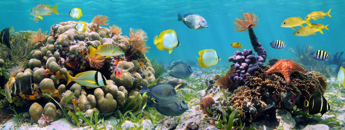 Reprodução de peixes ornamentais e suas características