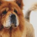 dog-1030992_960_720