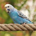 aves_bursite