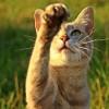 gato brincadeira violenta