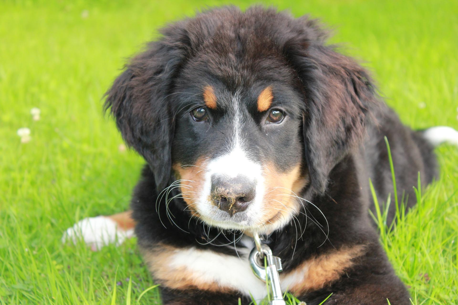 dog-2757161_1920