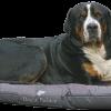 dog-2842905_1920