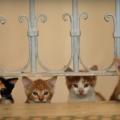 trailler-gatos