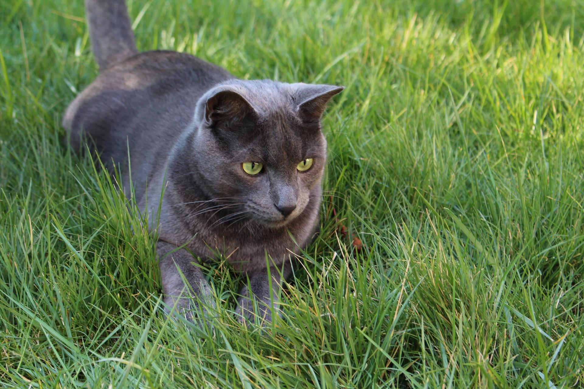 cat-1296998_1920